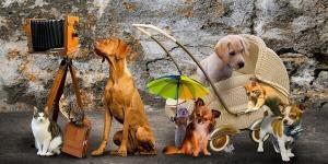 Adventskalender für Tiere